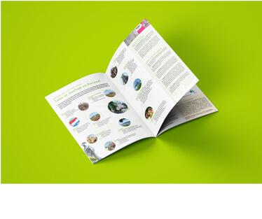 mediadesign linke Flyer Design - Gestaltung von Printmedien mit Beispiel einer Broschüre